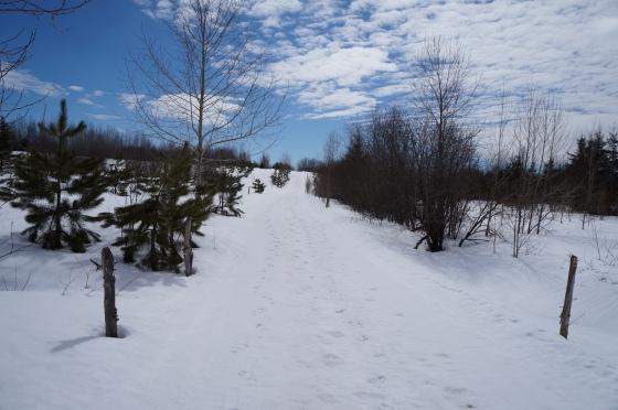 Promenade sur chemin lors d'une belle journée de printemps