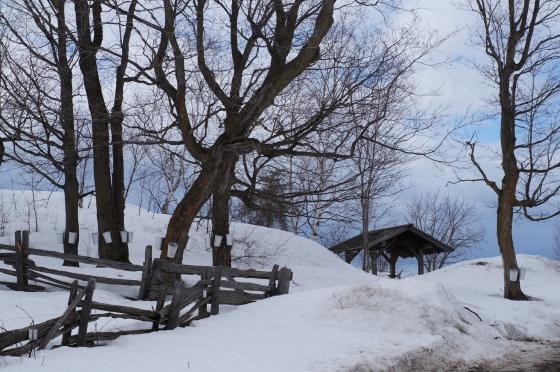 Des érables entaillés à l'auberge Le Baluchon en Mauricie au Québec